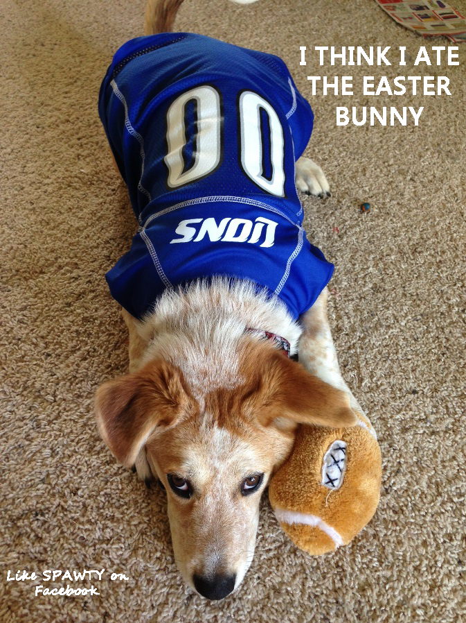 Detroit Lions dog.  lions  spawty  Easter  Easterbunny  7982aeb68