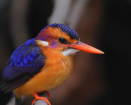 Bird for animal portrait