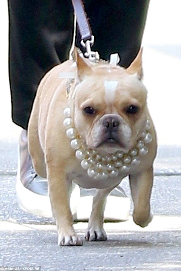 John Legend S French Bulldog Pippa Accessorizes With Pearl