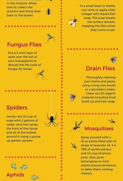 Easy Diy Remedies For Your 7 Most Hated Bugs Helpful Hints