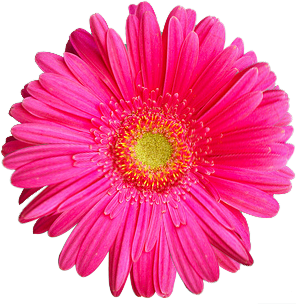 Real Flowers Png flowers png | Danh m�...