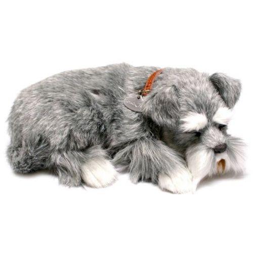 Schnauzer Jpg 500 500 Pixels Pets Schnauzer Art Animals