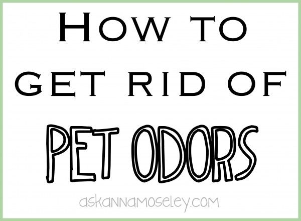 how to get rid of pet odors for the home pinterest