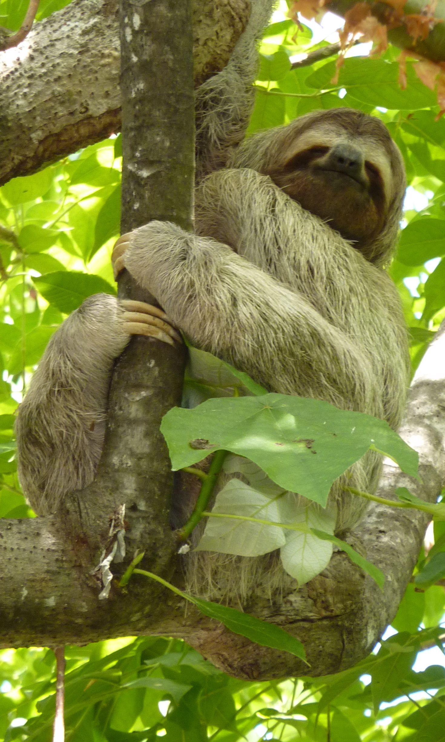 Costa Rica Rainforest Amazon rainforest animals