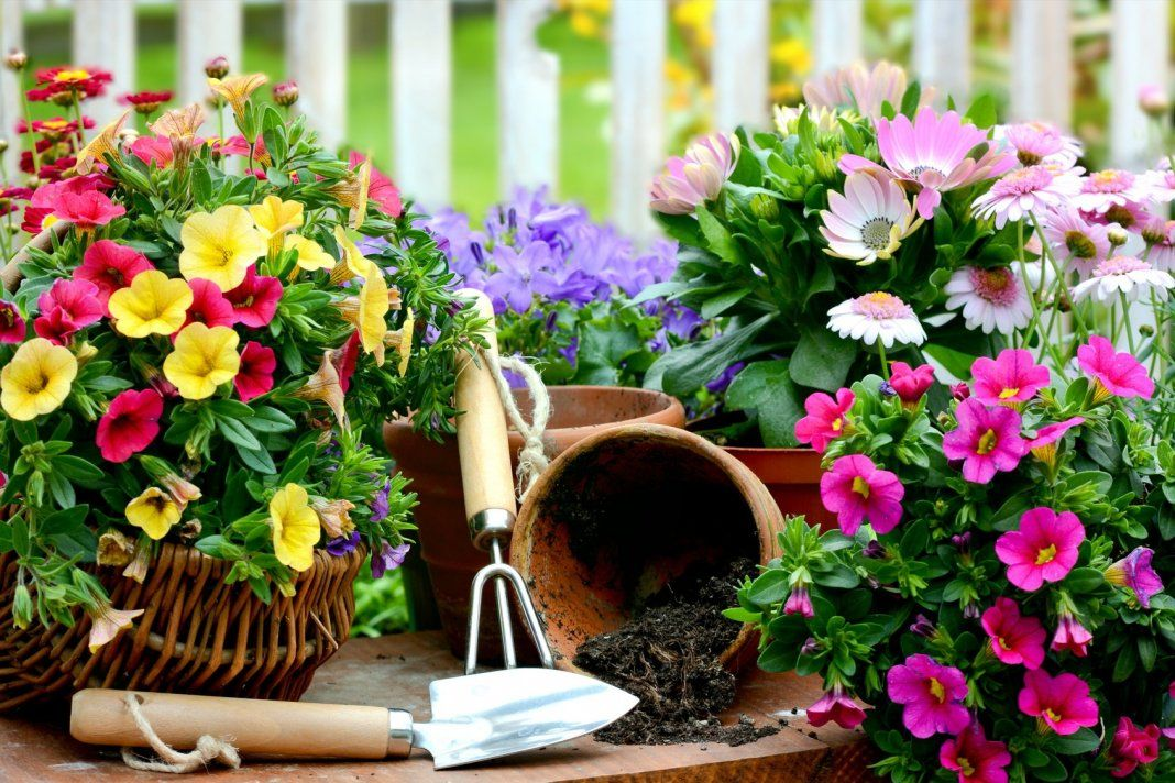 картинки цветочного домашних представляют бюджетные компактные