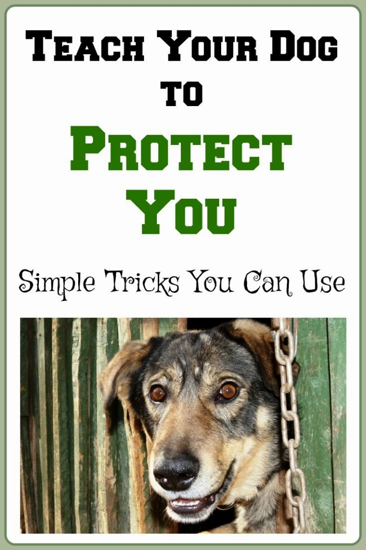 how to train your dog to protect your family