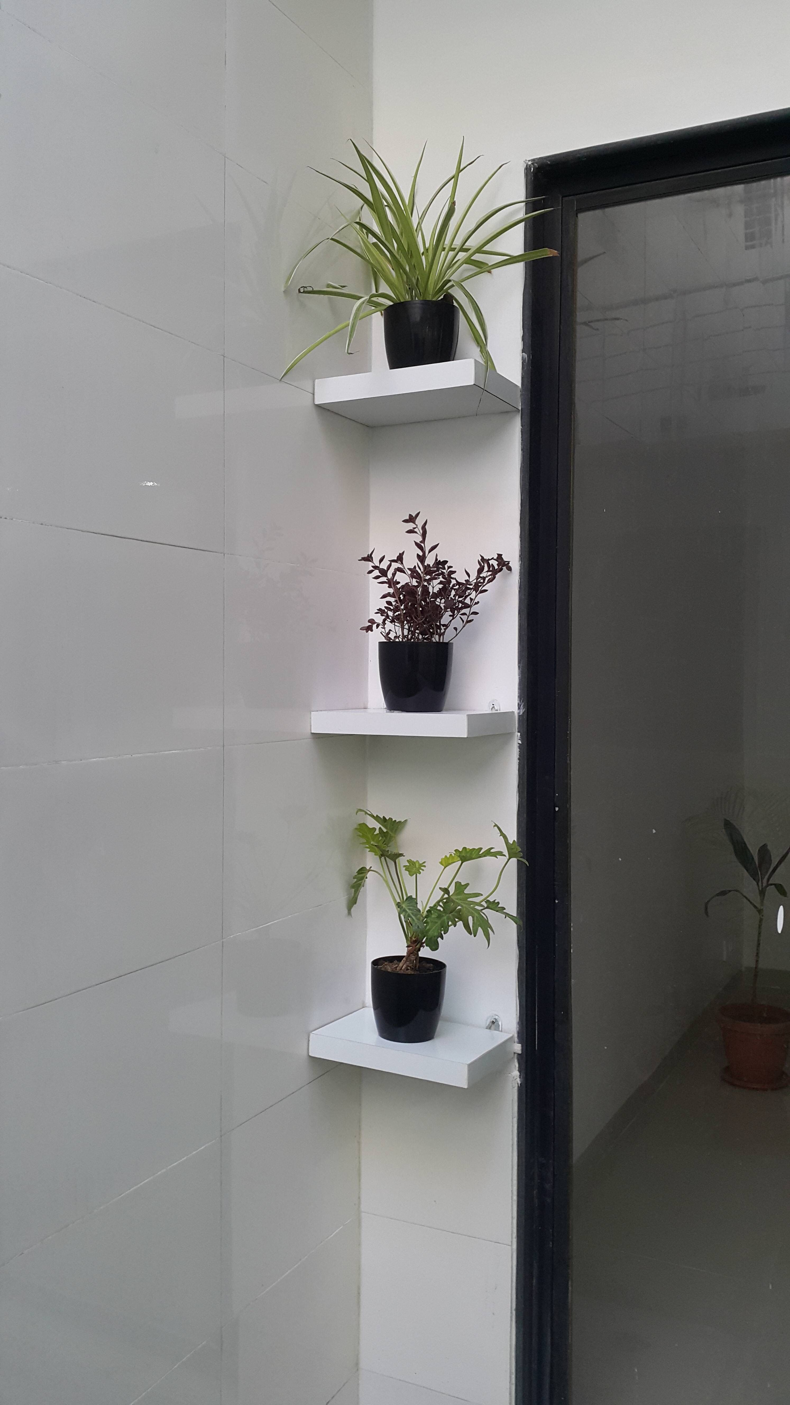 floating shelves with indoor plants indoor plants on sweet dreams for your home plants decoration precautions and options id=73592