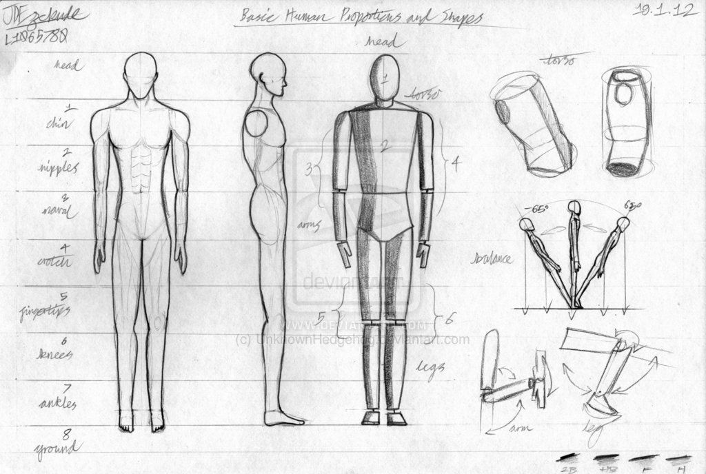 basic human proportions | Drawing Tutorials - Basic Body & Head ...
