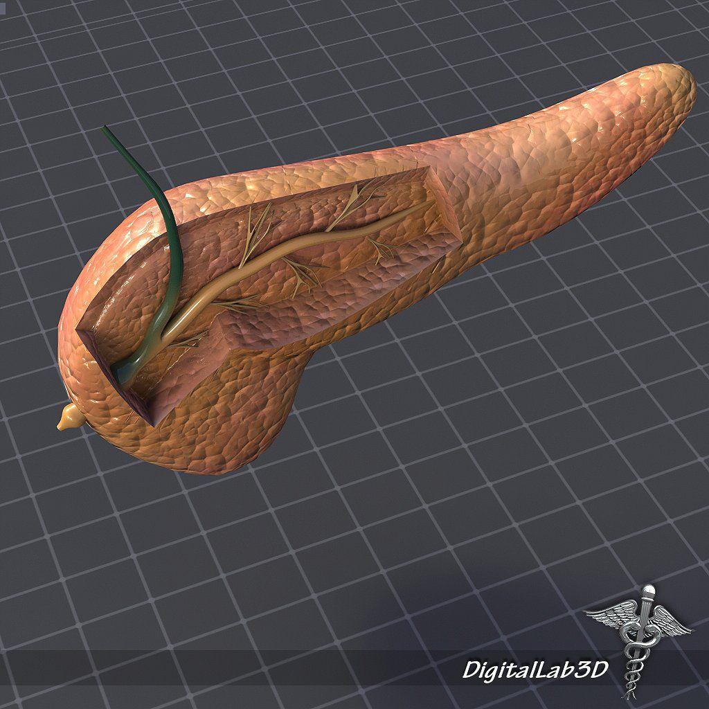 Pancreas Anatomy Lightwave Open Latest Ds