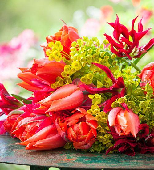 Pin On Bold & Brilliant Tulips