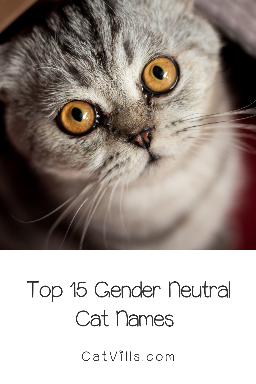 15 Unique Adorable Unisex Cat Names Catvills In 2020 Cat Names Cats Funny Cat Memes