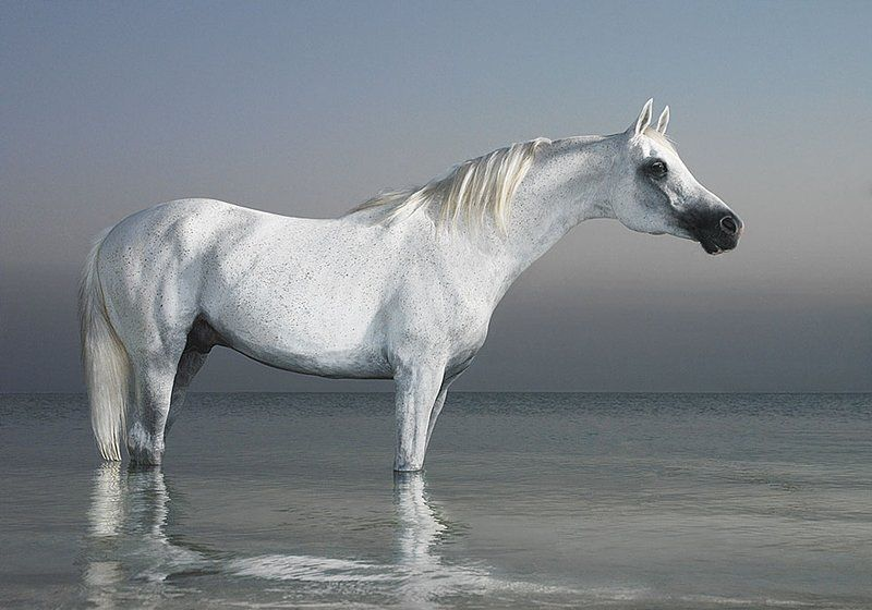 A Beauty To Behold Horses Horse Photography Animal Photography