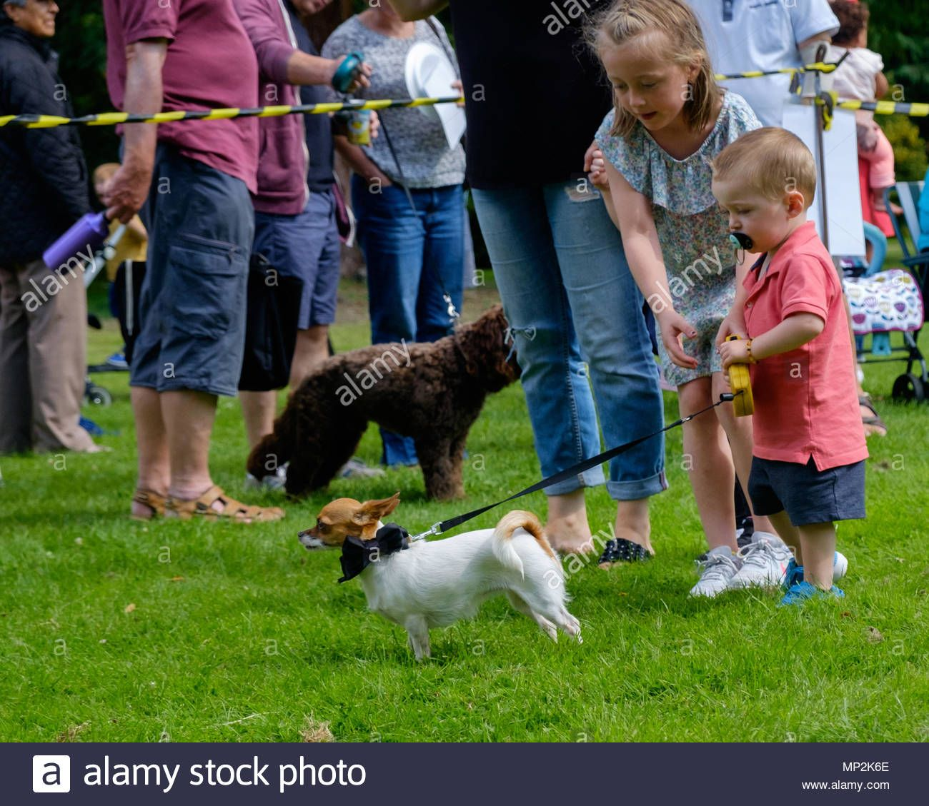 Big Sister Helps Toddler Brother Walk Small White Dog With Bow On Collar At Dog Show In Canons Park Edgware North London A Family Fun Day Dog Show Family Fun