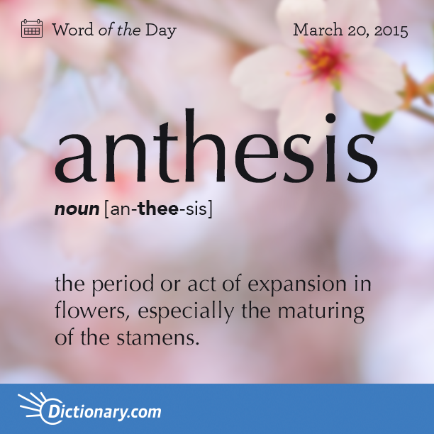 definition of anthesis