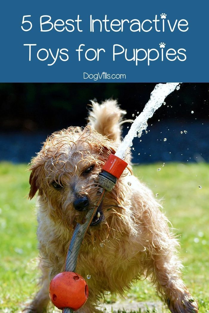 The Best Interactive Dog Toys For Puppies Interactive Dog Toys