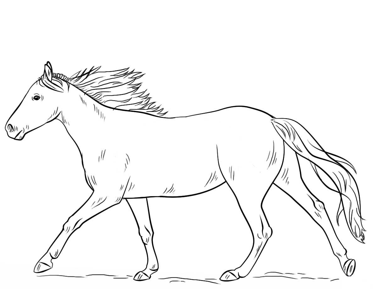 Running Horse Coloring Page Horse Coloring Horse Coloring Pages Horse Coloring Books
