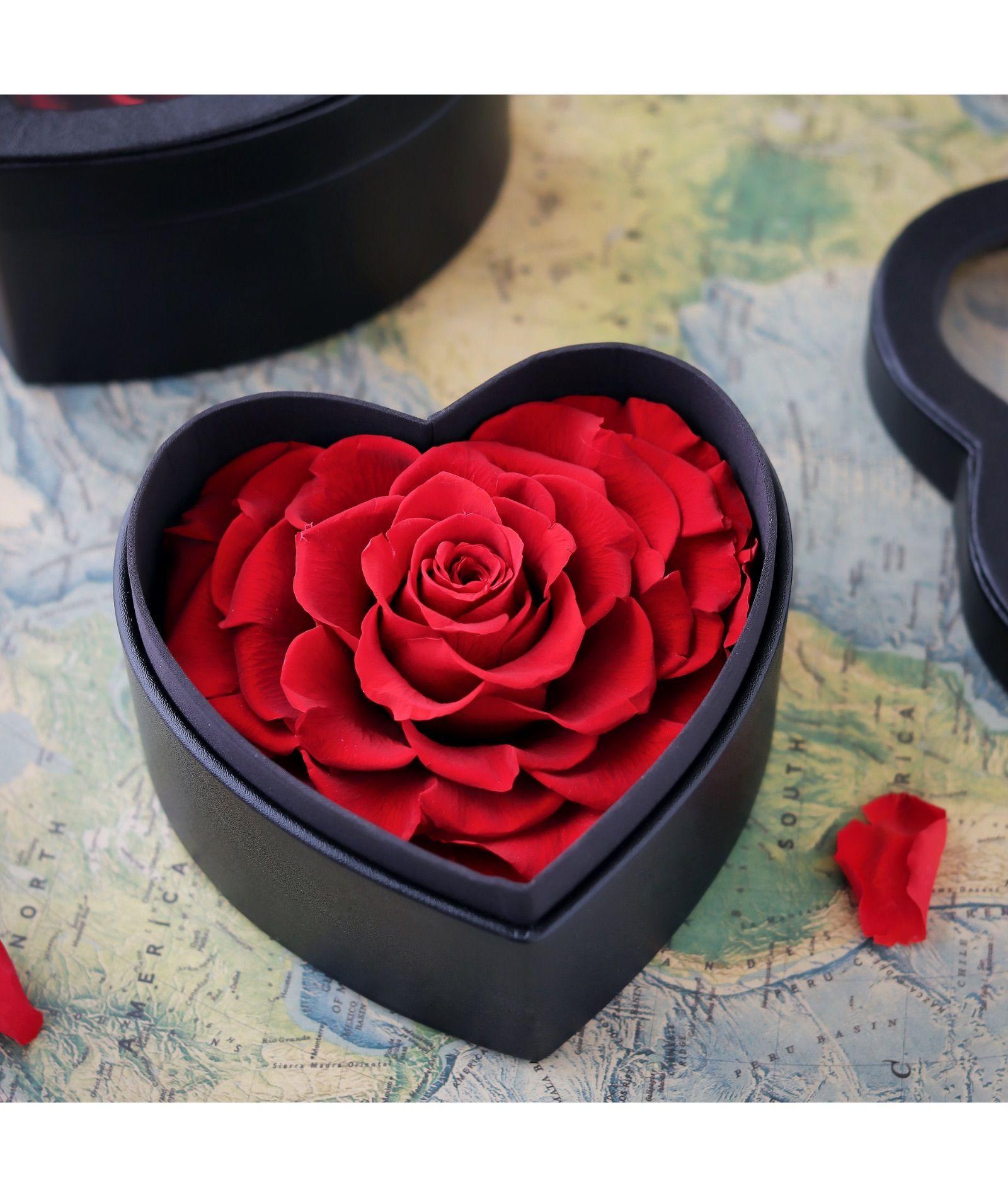 وردة أبدية قلب احمر Rose Plants