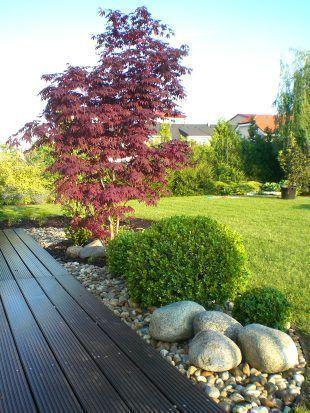 Tree as the basis of the garden TIP ZC CS as tree Des GardenPlanningbeginner GardenP My
