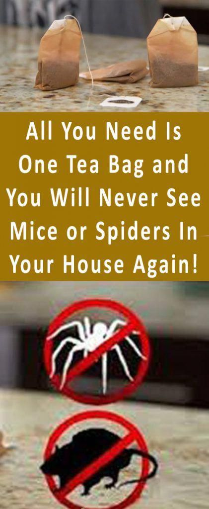 All You Need Is One Tea Bag and You Will Never See Mice or Spiders In Your House Again! #health #bea...