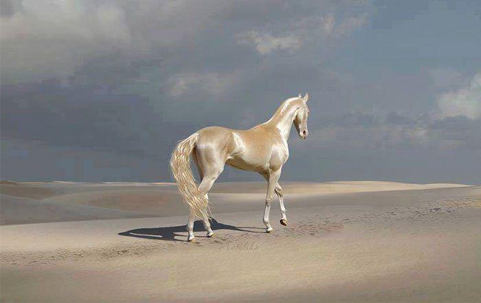 ТОП-7 самых красивых лошадей мира: породы, описание, фото ...
