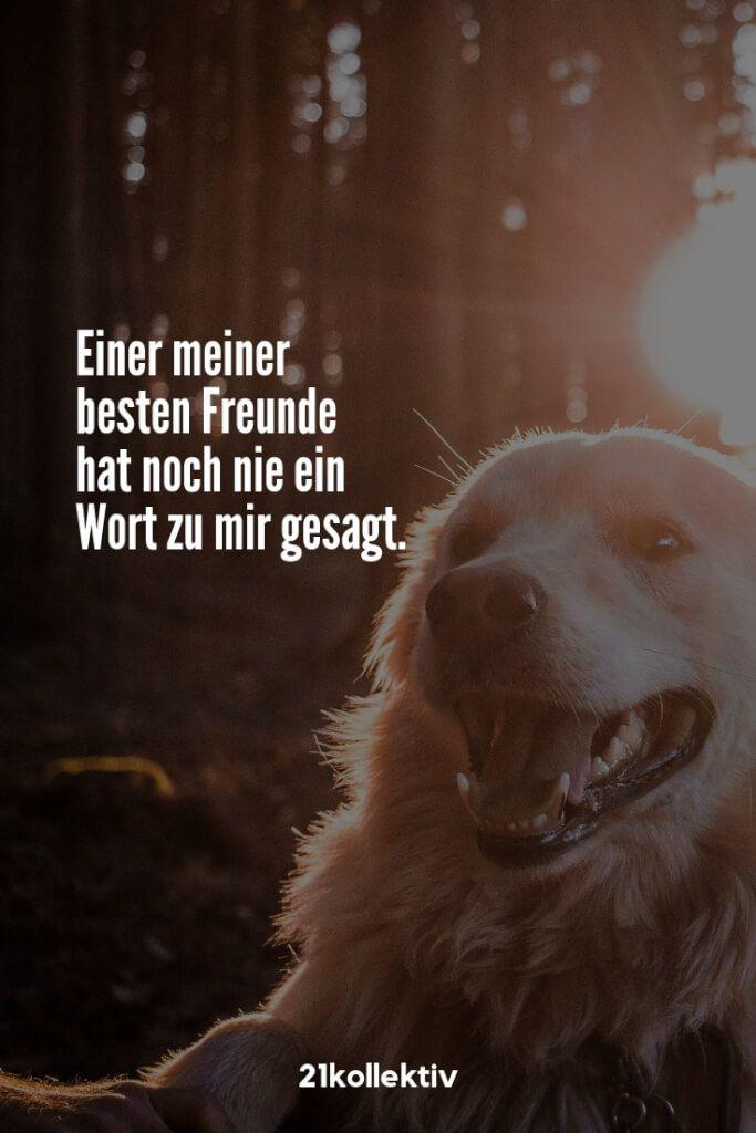 Photo of Spruch des Tages: 101+ Sprüche und Zitate für jeden Tag