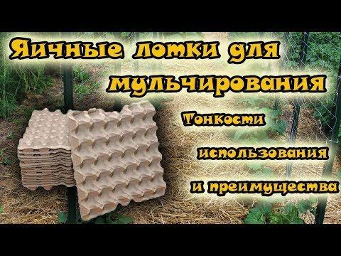 Ники Минаж - m 976