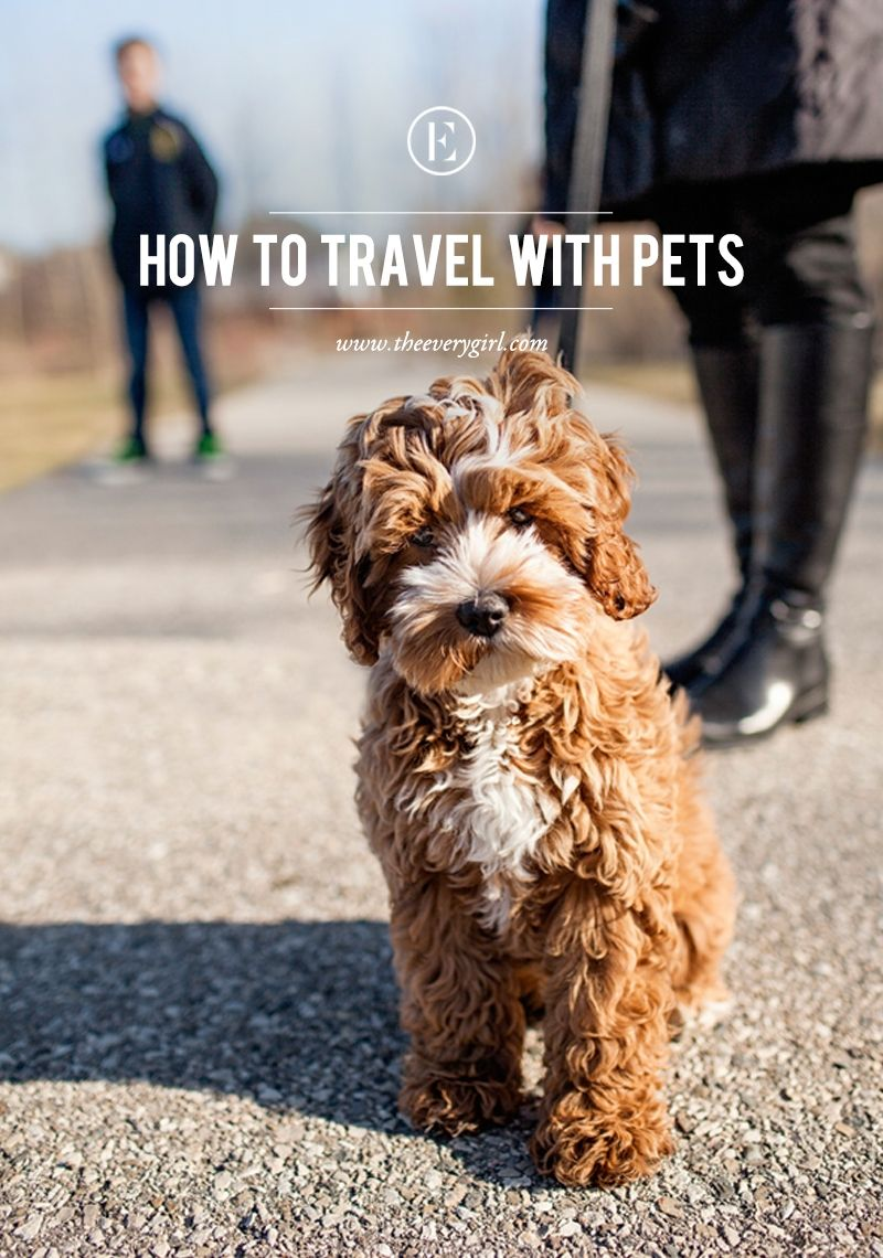 How To Travel With Pets The Everygirl Cockapoo Puppies Pet Travel Pets