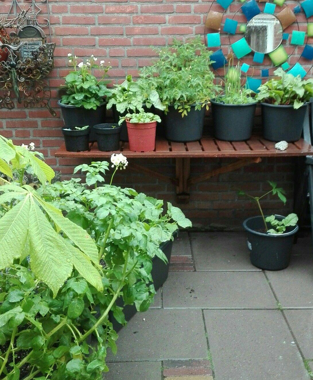 My garden,my food