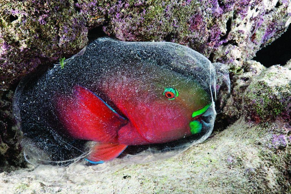 дочка картинки о рыбе сон керамических изделий