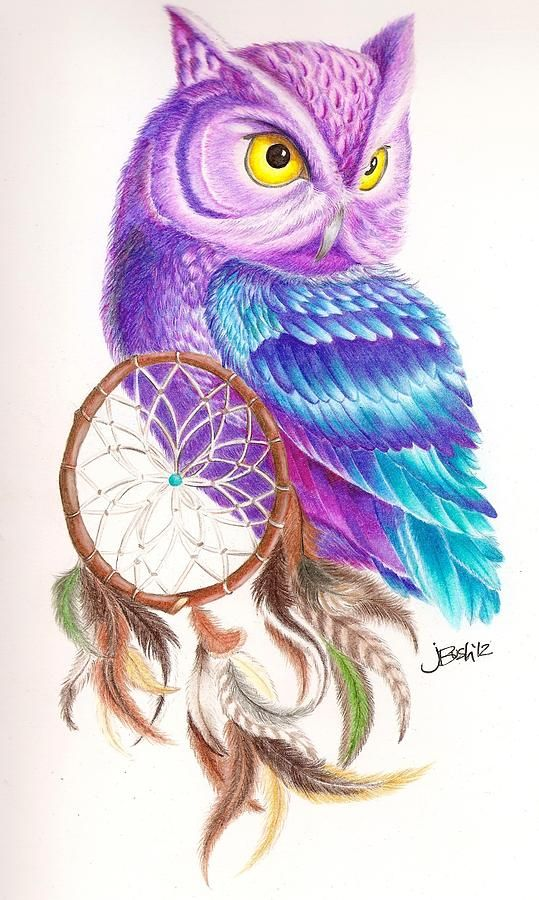 Owl Dreamcatcher Canvas Print Canvas Art By Jane Bush Really Owl Drawings With Color