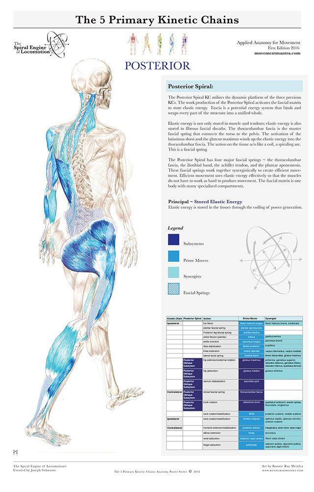 THE SPIRAL ENGINE OF LOCOMOTION | Health | Pinterest | Gesundheit
