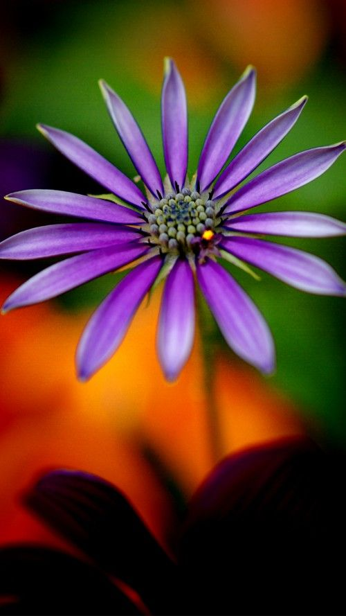 Full Hd Wallpapers 1080p For Mobile With Purple Flower Android