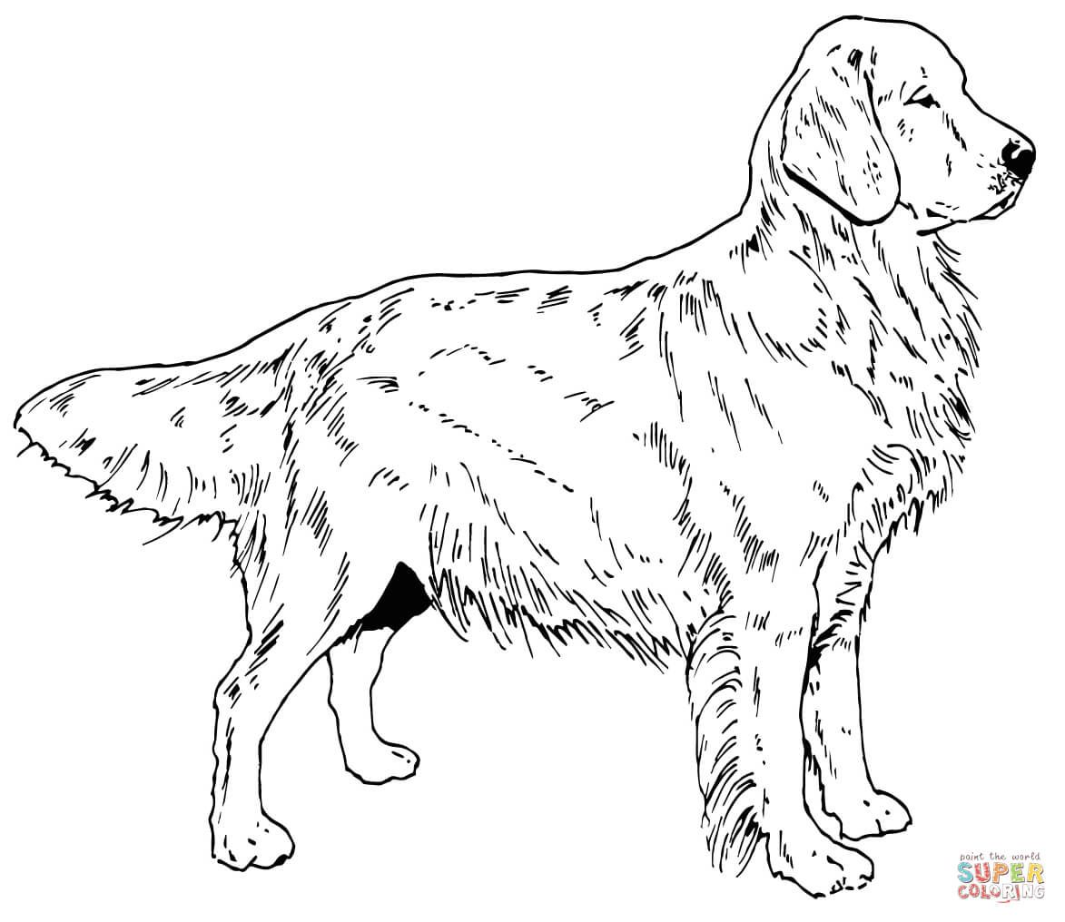 Jumping Labrador Retriever Coloring Page