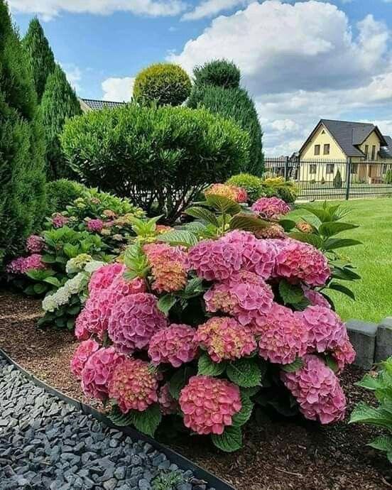 Pin By Estela Codaro On Rosliny In 2020 Beautiful Gardens Dream Yard Garden Outdoor Flowers