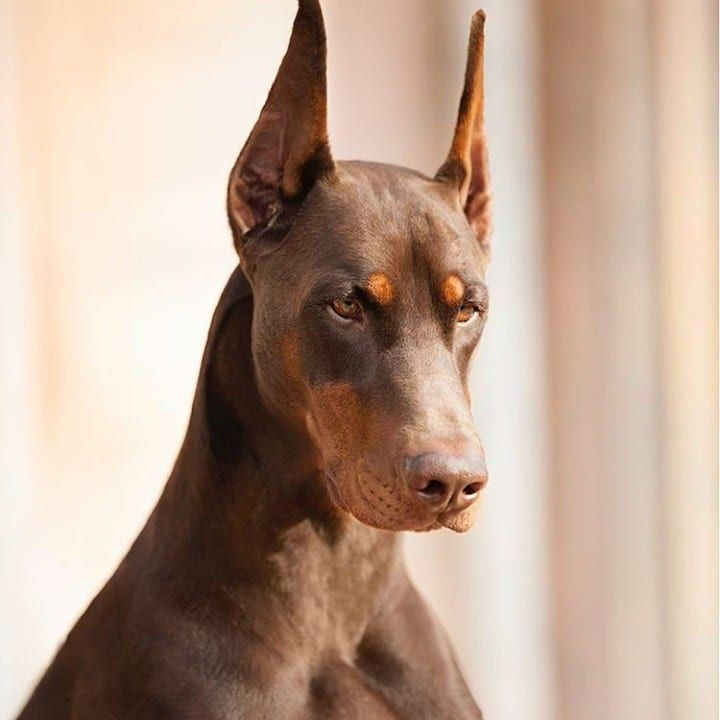 Dog breeds that weren't meant for your home | Page