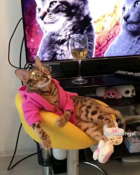 Cat is way too cool