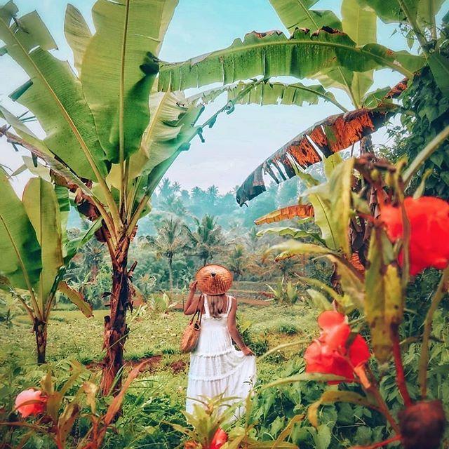 Air BNB = c'est gratuit ! Découvrez comment voyager gratuitement et légalement grâce à AIR BNB  Bali