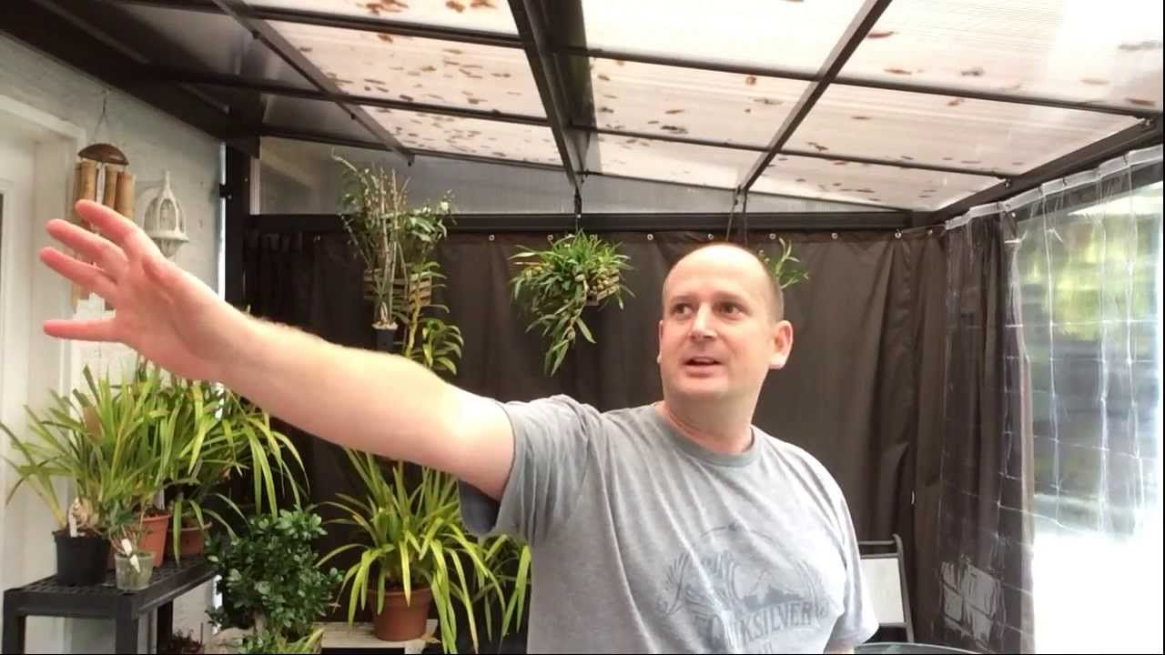 How To Bloom Cymbidium Orchids What Do Cymbidium Spikes Look Like And New Grow Area Dendrobium Orchids Care Cymbidium Orchids Beautiful Orchids