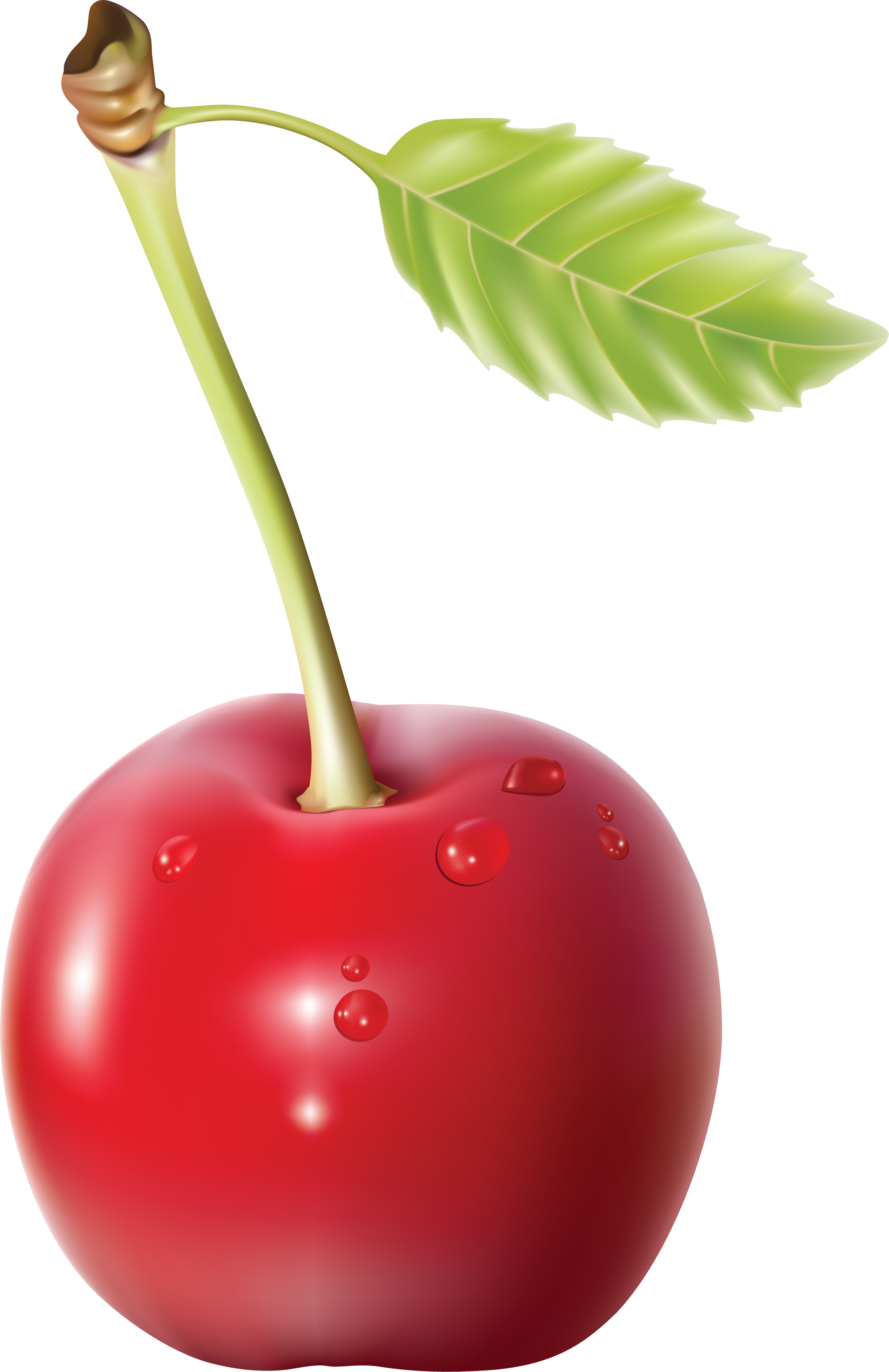 cherry PNG image image with transparent background (With