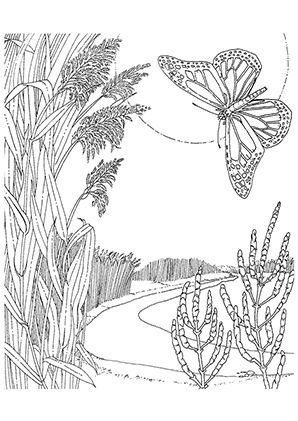 Ausmalbild Schmetterling in der Natur | butterfly coloring ...