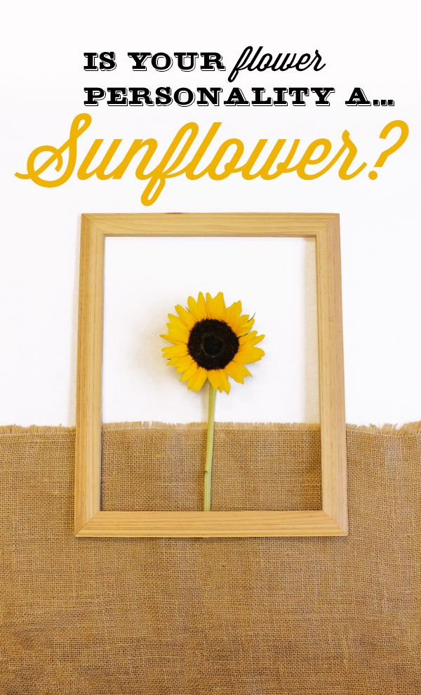 Are You A Sunflower You Tend To Be A Little Ray Of Sunshine You Are Very Social Hence Why You Like To Surround You Essay Contests Visa Gift Card Happy Daisy