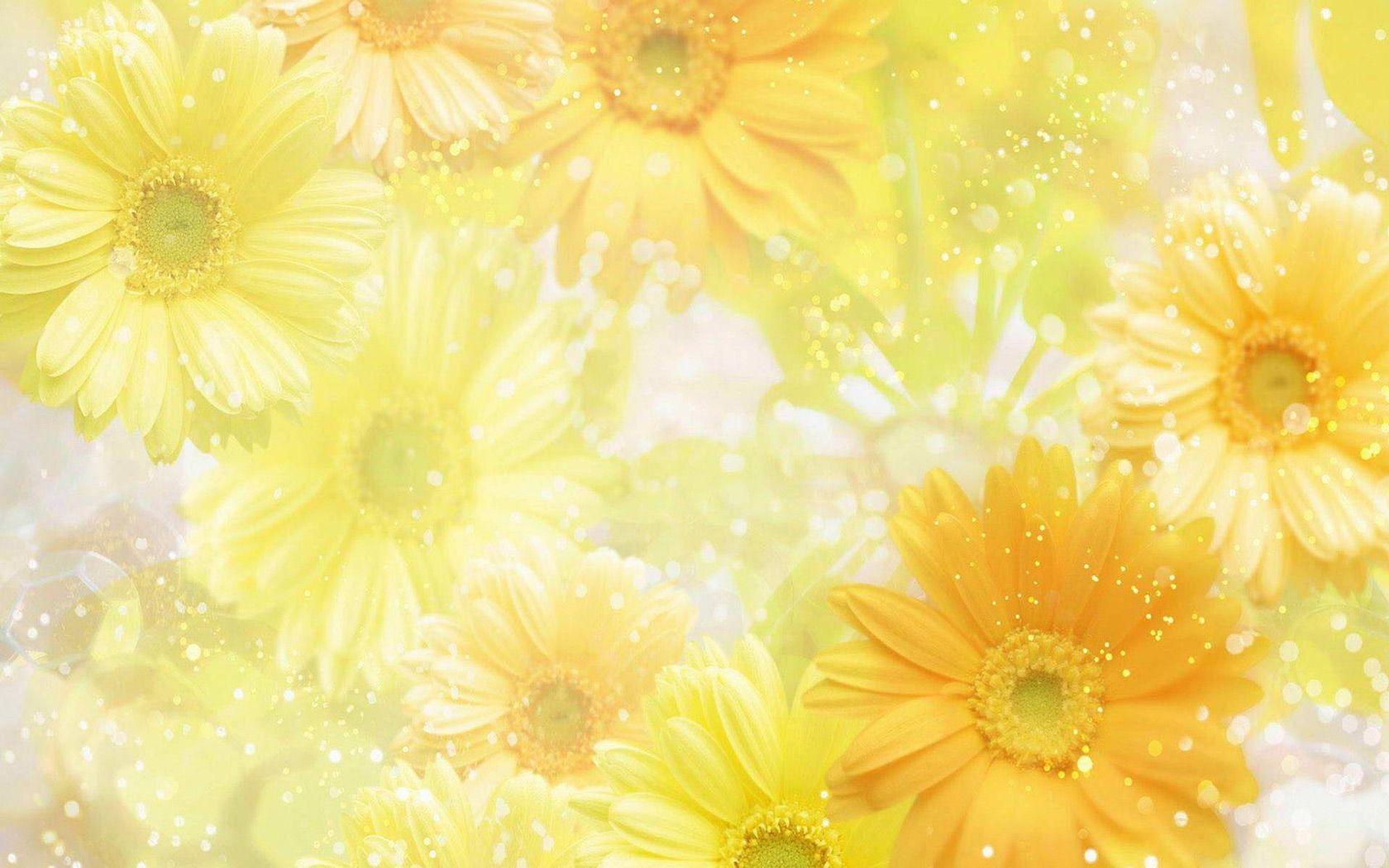 Free Spring Desktop Wallpaper | ... free desktop wallpaper of yellow spring flowers free computer desktop