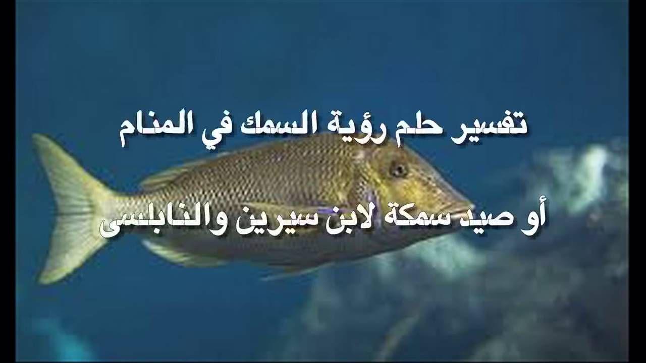 تفسير حلم صيد السمك ما معني صيد السمك في الحلم Fish Pet Pets Animals