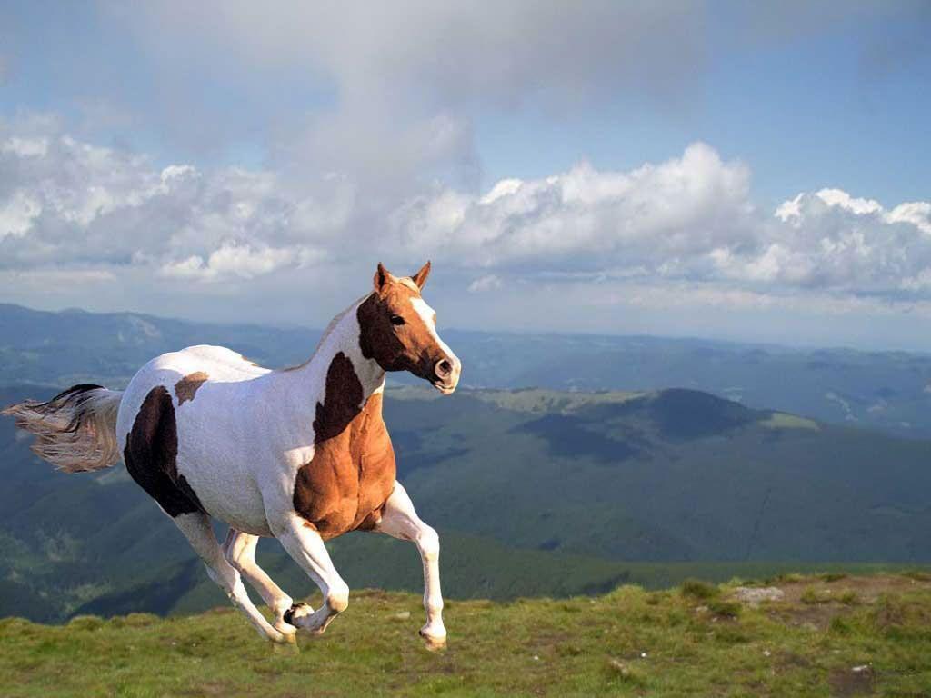 2 Running Horse Clouds