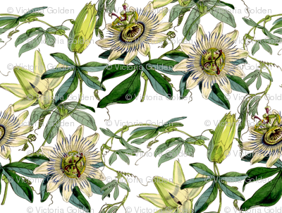 Passion Flower Victoriagolden Spoonflower Botanical Drawings Passion Flower Paintings Prints