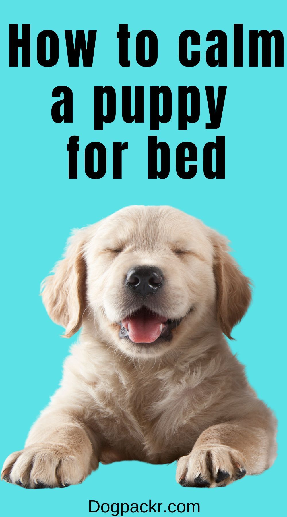 How To Calm A Puppy Down For Bed Dogpackr In 2021 Puppies Sleeping Puppies Excited Dog