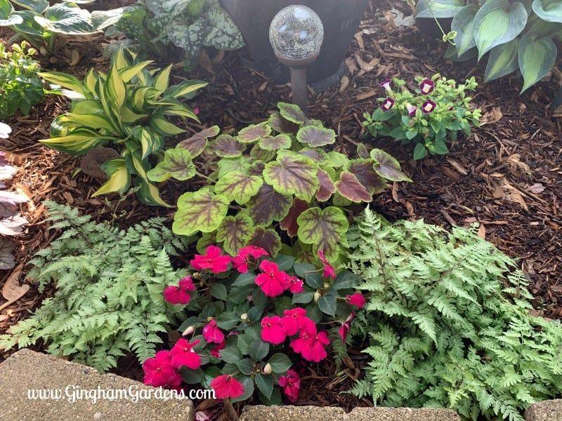 Small Shade Garden Transformation – Gingham Gardens Garden