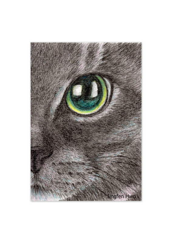 Lifelike Realistic Cat Drawing Watercolor Pencil Black Cat Face