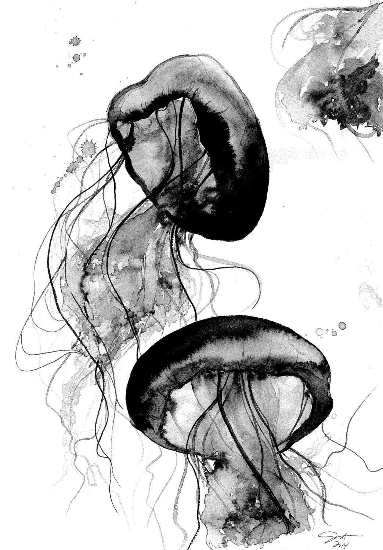 Schwarz Und Weiß Qualle Aquarell Studie Von Von JessicaIllustration
