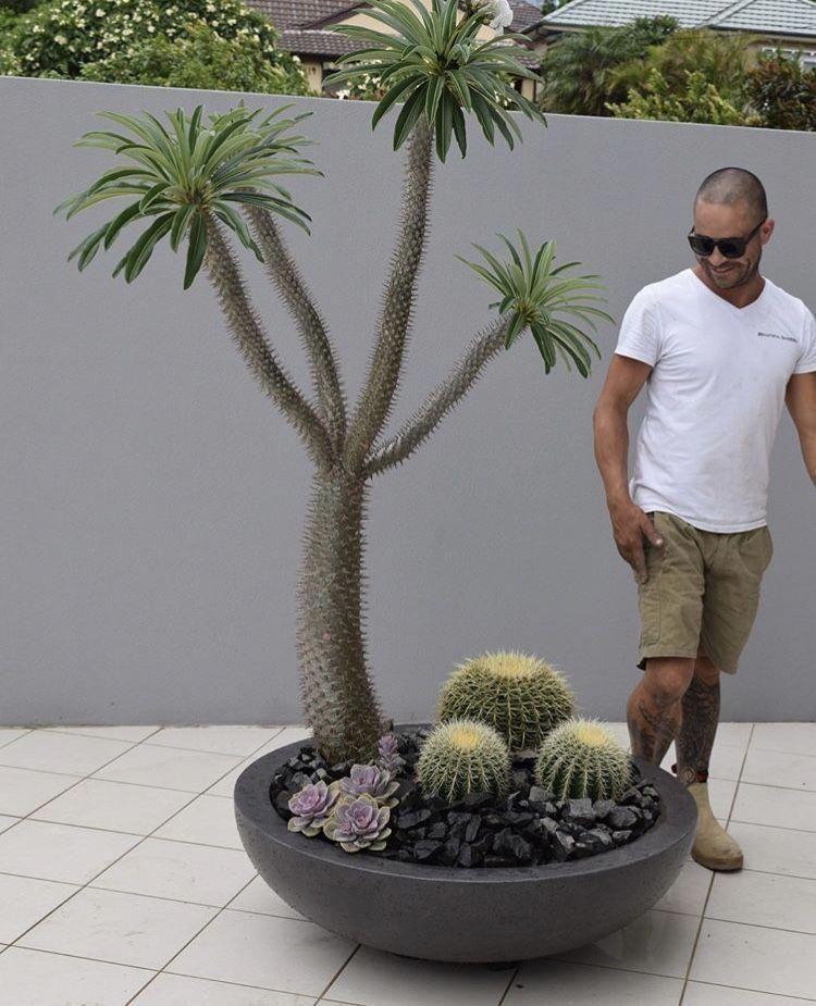 How To Use Succulent Landscape Design
